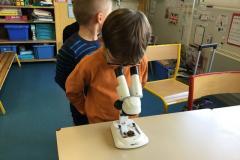 observation du mycélium à la loupe binoculaire