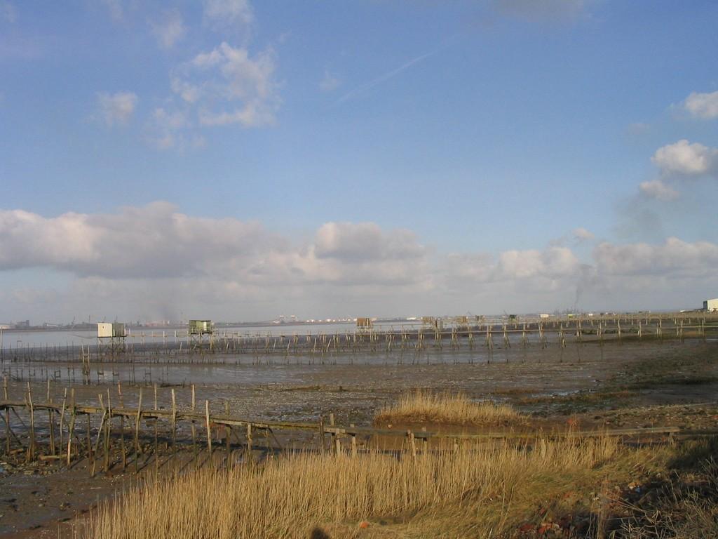 Loire et roselieres