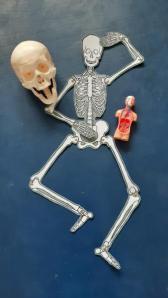 Nos Squelettes !